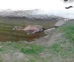 Aparece ahogado