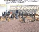 Reafirman técnicas a binomios caninos
