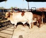 Sin riesgo hasta el momento para el ganado por las altas temperaturas