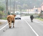 Grave peligro animales sueltos en vías públicas