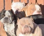 Estos perros esconden en sus orejas el maltrato