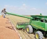 Mal ciclo agrícola recolectan apenas mitad de lo sembrado