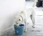Recomienda gobierno municipal cuidado de sus mascotas