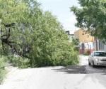 Tierra reblandecida causa que árboles se vengan abajo causando riesgo a peatones y automovilistas