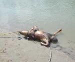 Autopsia revela un asesinato en el Bravo
