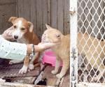 Corren a vacunar sus mascotas
