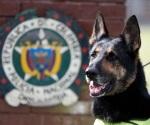 Cartel colombiano pone precio a cabeza de perra policía