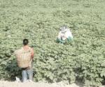 Sufren agricultores acoso en carretera