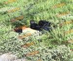 Localizan cadáver por carretera Monterrey
