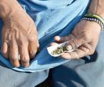 No todos pueden cultivar mariguana pese a jurisprudencia
