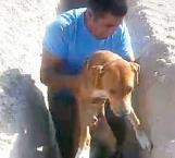 Rescatan a perro que cayó a una zanja en colonia